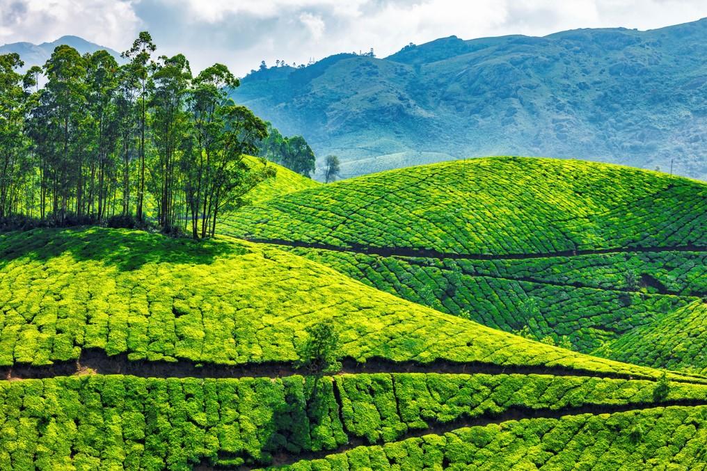 Kerala Holidays- Munnar