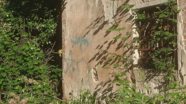 GRAFFITISTELLA-crop