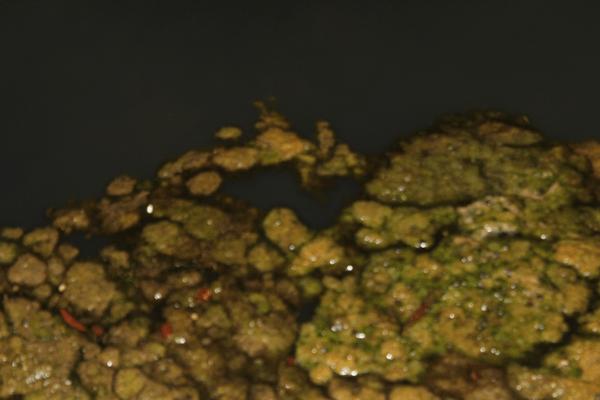 FOTO-MOSTRO-crop