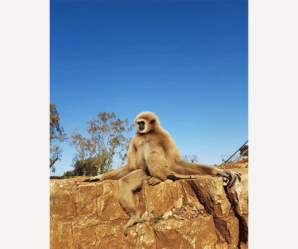 zoosafari4