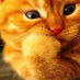 profile image of McAlley Cat
