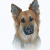 profile image of Gsdlady Bo