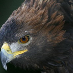 profile image of Westweald Falconry
