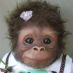 profile image of Monkey Business