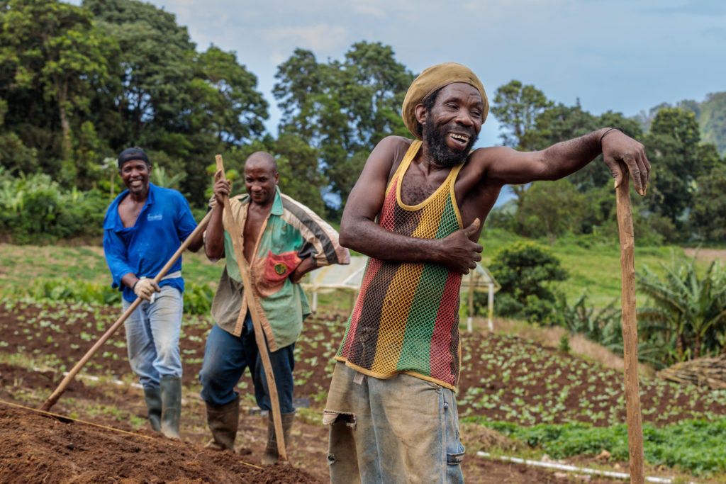 Saint Lucia potato farmers