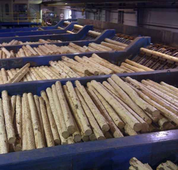 The lumber sawmill, cutting 400.000 m³ of timber annually.