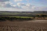 El entorno del viñedo como escenario de actividades al aire libre