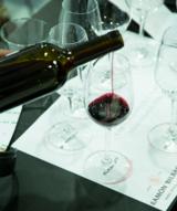 Cata ramon bilbao vinos terrun%cc%83o col