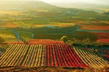Rioja alavesa col