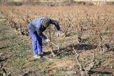El viñedo es parte del paisaje rural
