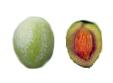 aceituna-variedad-verdeja-castellana