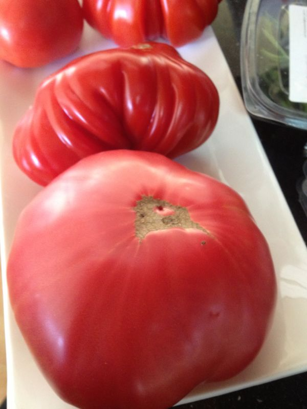 Los tomates p g 2 for Noctuelle de la tomate