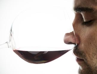 Curso de cata de vinos logo
