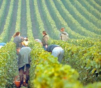Enoturismo en la champagne bodegas vinos restaurantes visitar logo