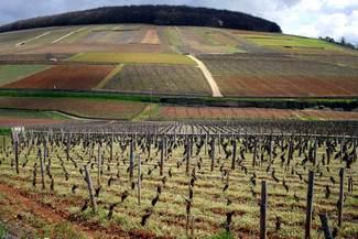 Les climats du vignoble de bourgogne au salon de l agriculture logo