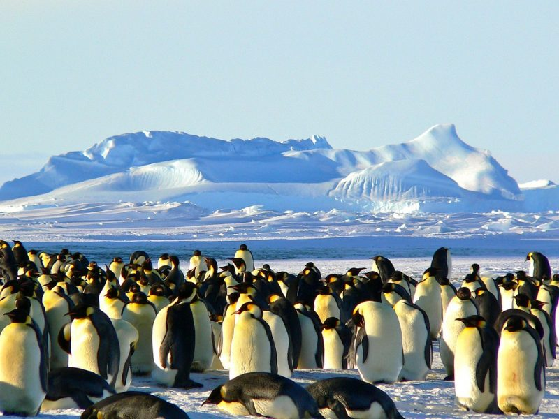 New Year in every continent - Antartica