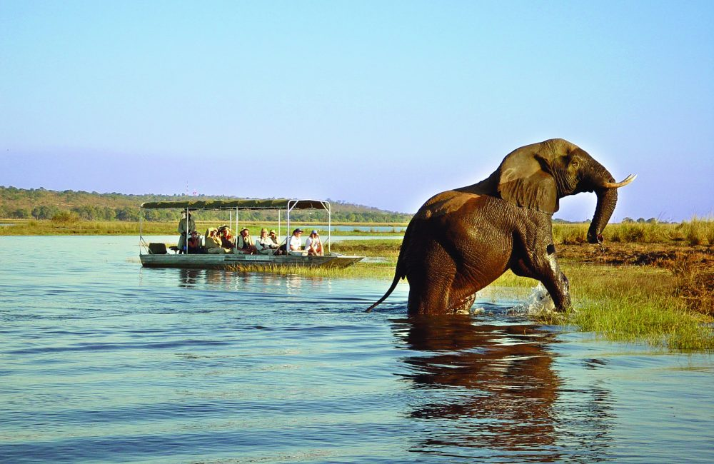 Chobe Day Trip - Africa Incentive Trips