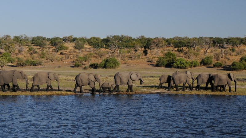 elephant-1653016