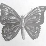 motýl 0