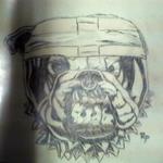 pitbull 0