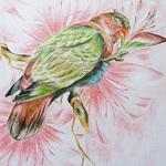 papousek-lora 1