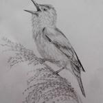 ptacek 1