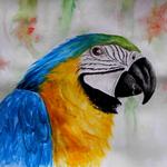 papousek- 1