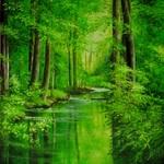 v-zelenem-tichu 0