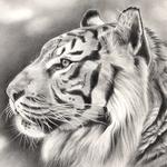 Rok-tygra 0