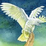 Papoušek-kakadu 1