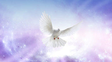 White dove in a blue purple sky symbol of faith