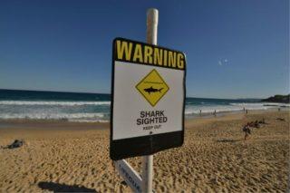 shark-infested-australia-afp-0401