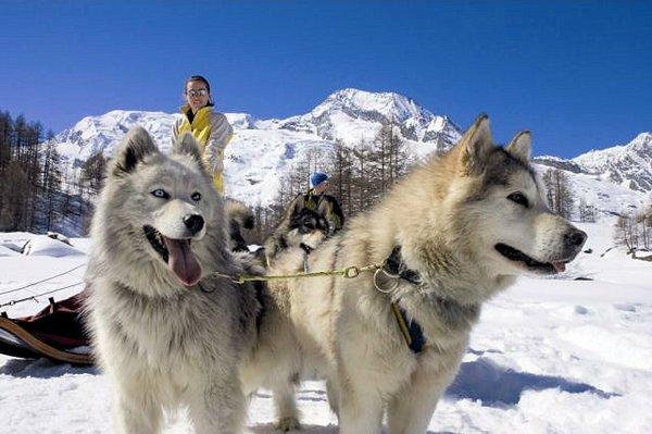 sainte-foy-tarentaise-sledehonden-frankrijk-wintersport-ski-snowboard-raquette-schneeschuhlaufen-langlaufen-wandelen-interlodge.jpg