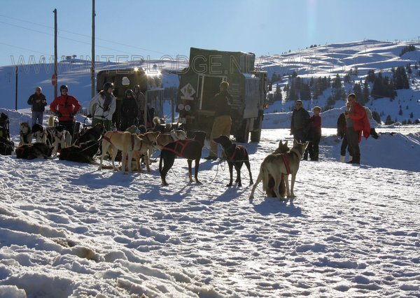 sledehonden-les-saisies-espace-diamant-wintersport-frankrijk-ski-snowboard-raquettes-schneeschuhlaufen-langlaufen-wandelen-interlodge.jpg