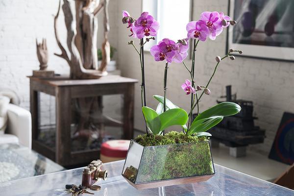 Orchid-arrangements-dubai