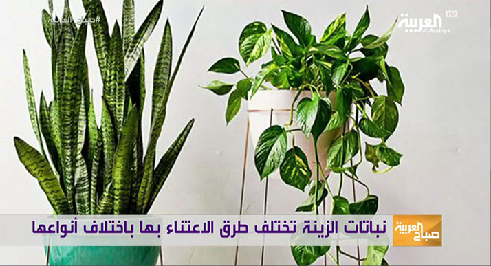 Arabic-How-to-take-care-of-indoor-plants
