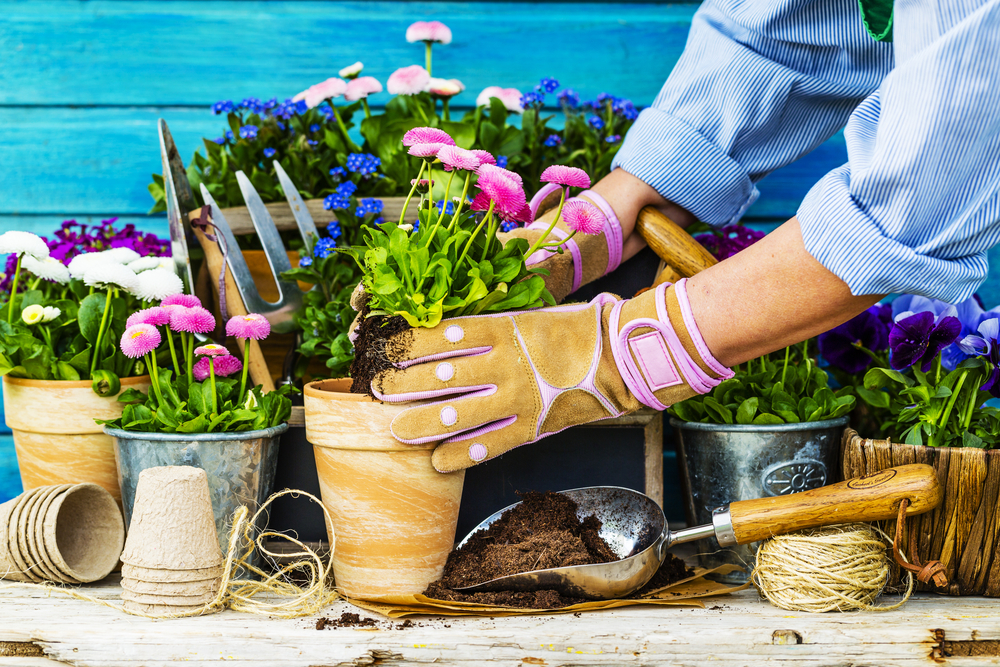 How to Plant Flowers in Pots
