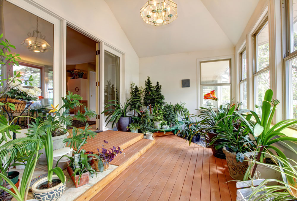 Colorful-House-Plants-for-Your-Home