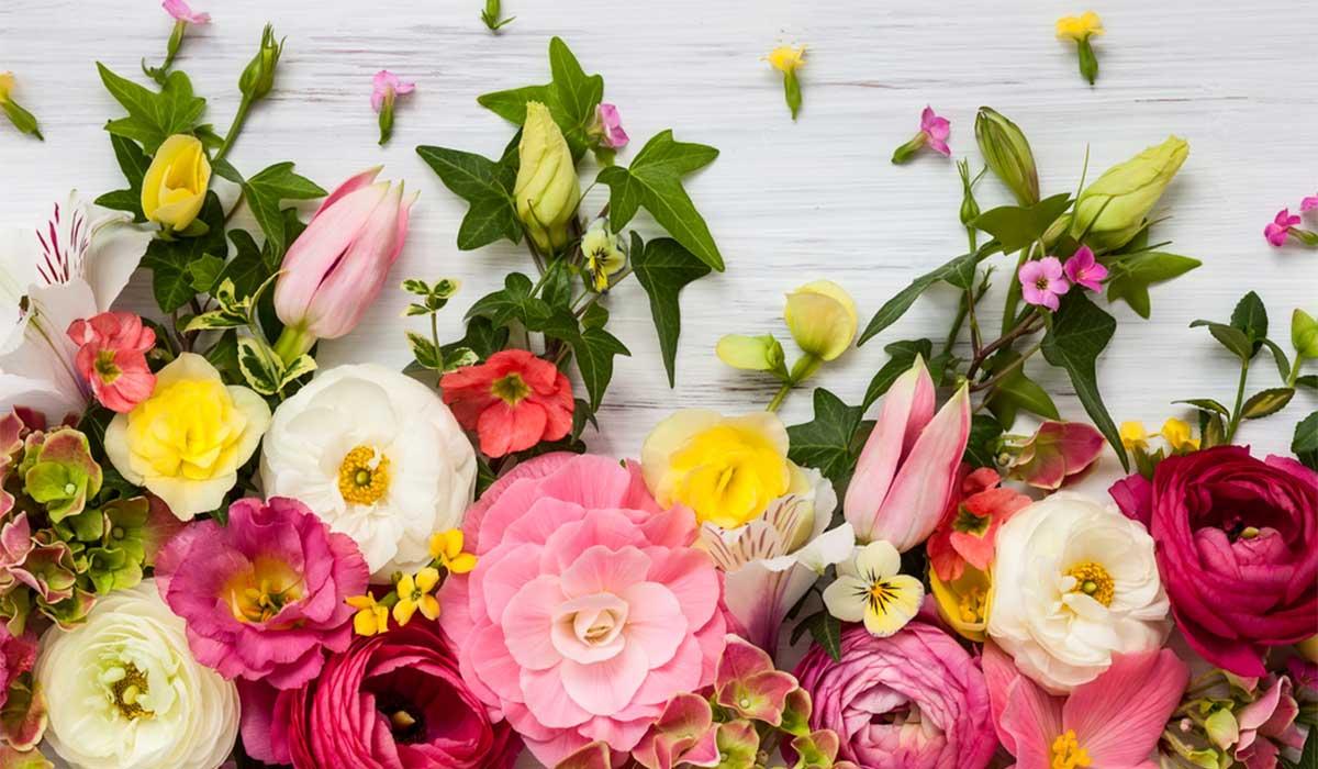 Top-5-Spring-Flowers