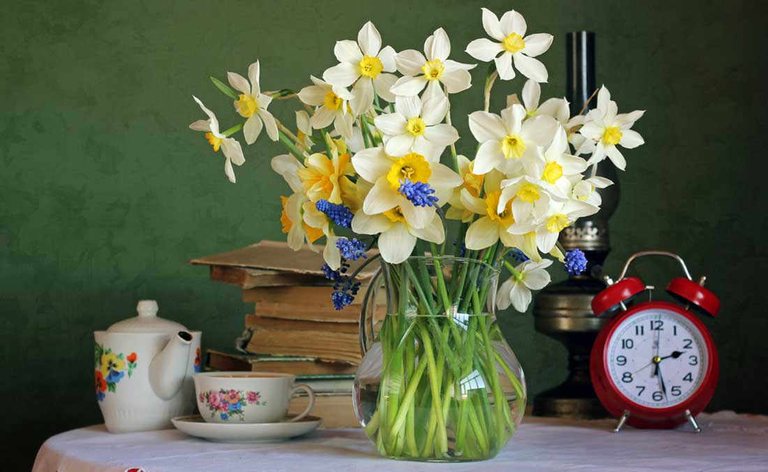Daffodils-for-a-March-Birthday
