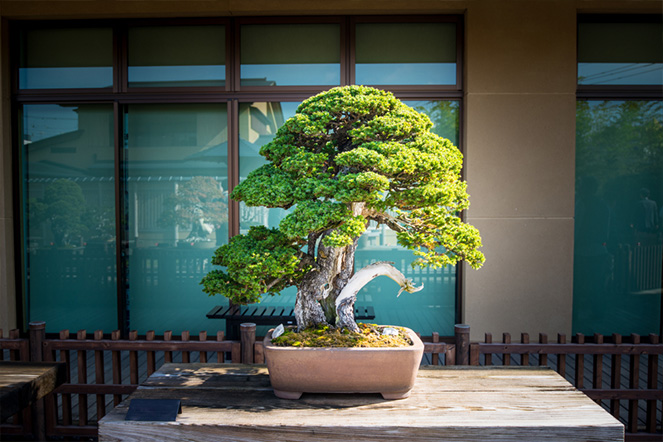 Learn-More-About-Bonsai