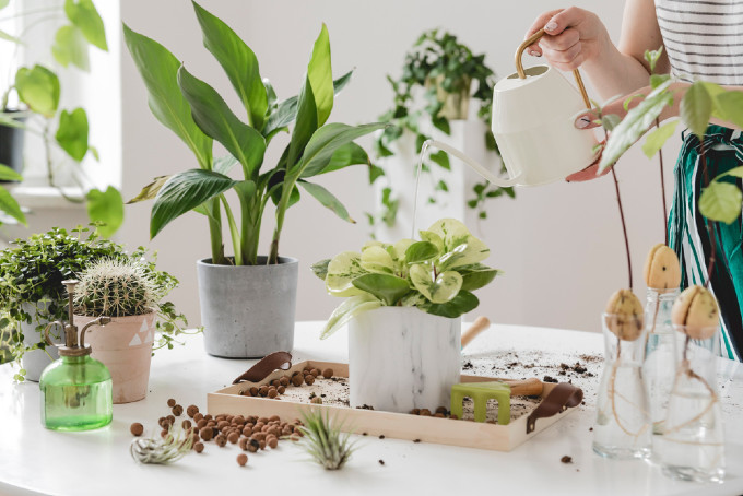 Garden Plants to Have at Home in Dubai
