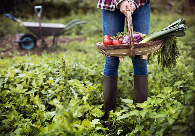 Tips for Growing a Vegetable Garden in Your Backyard in the Summer