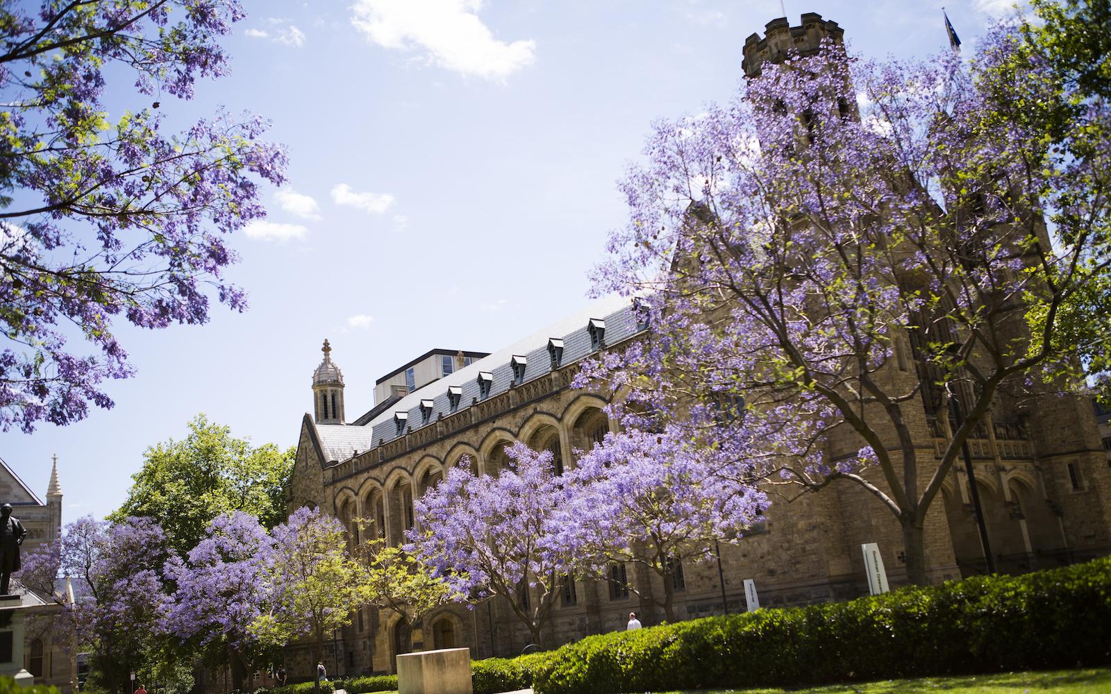 The University of Adelaide  banner