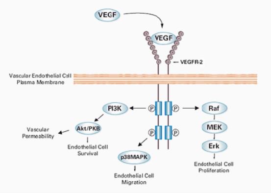 chart-VEGFR2