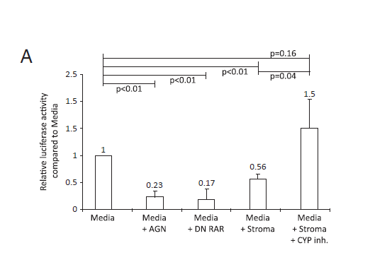Effects of stromal CYP26 on RA metabolism