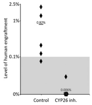 Percentage of human engraftment in the bone marrow of individual NSG mice