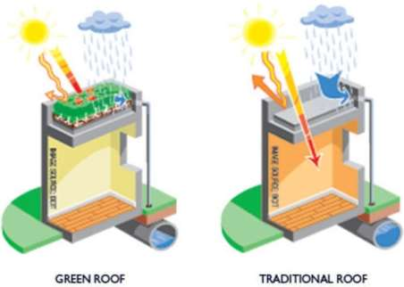 Green Roof vs Standard Roof.jpg