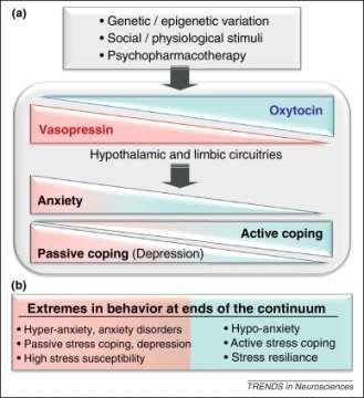 Balance of Brain Oxytocin and Vasopressin