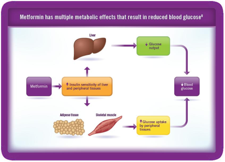 http://www.komboglyze.eu/sites/default/files/images/Metformin%20has%20multiple%20metabolic%20effects%20that%20result%20in%20reduced%20blood%20glucose.png